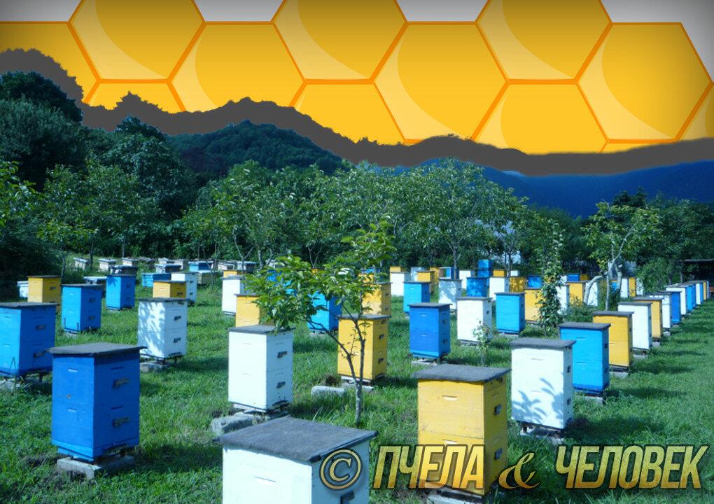 Пасека - это... пчеловодство для начинающих