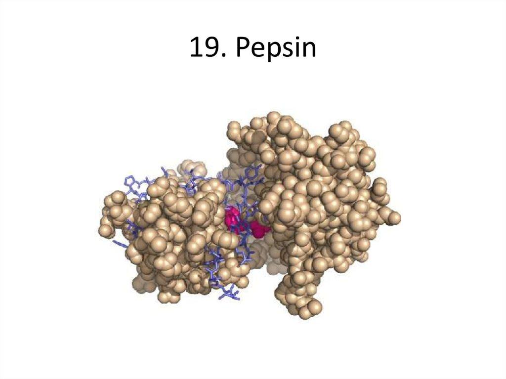 Пепсин: признаки того, что вам нужен этот жизненно важный фермент и как его получить - - фитнес - 2020