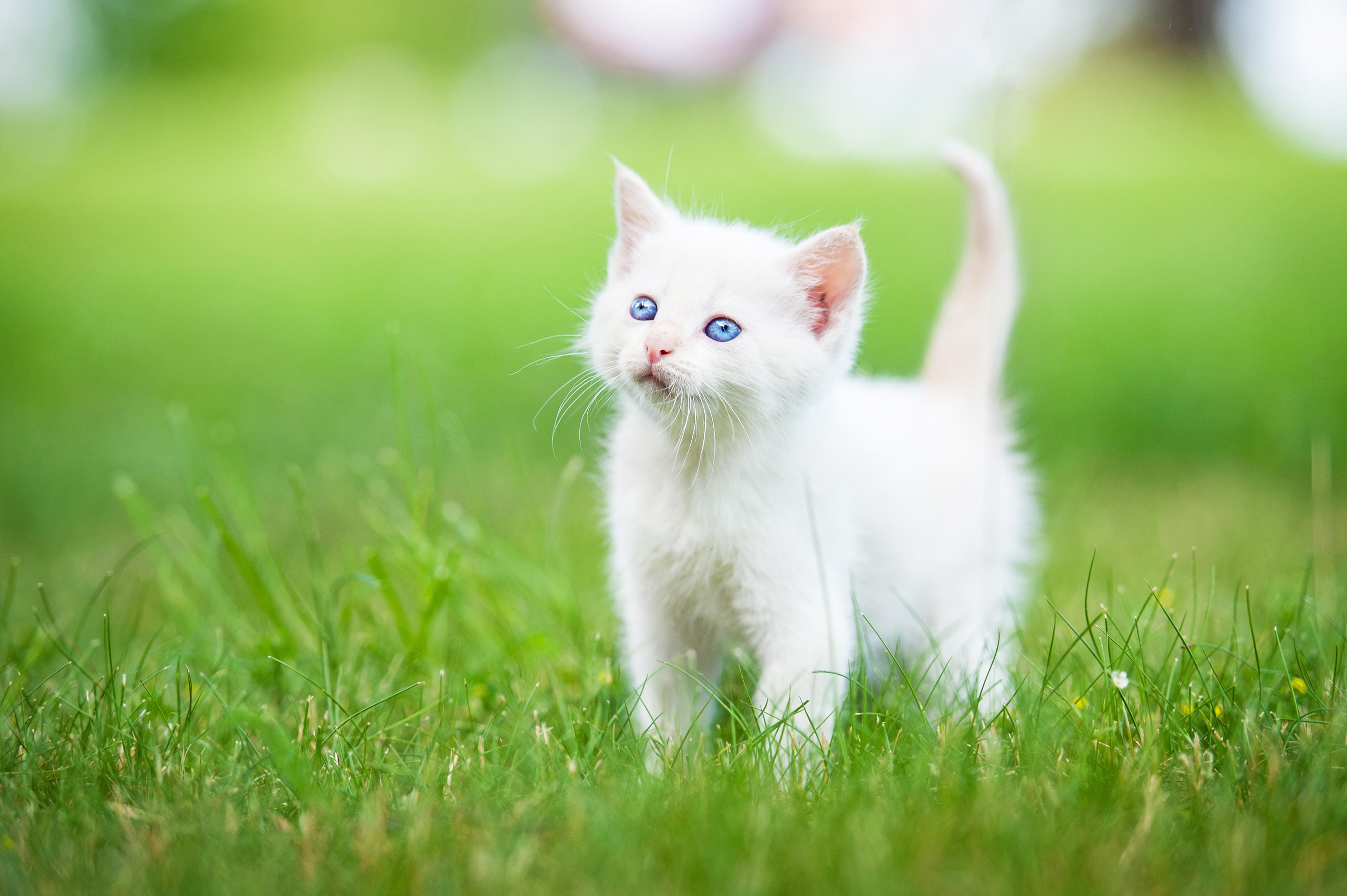 Котик, пётр