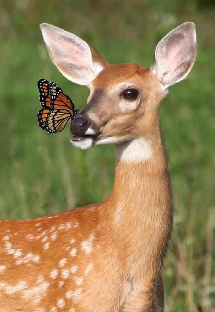 Значение слова «животное»
