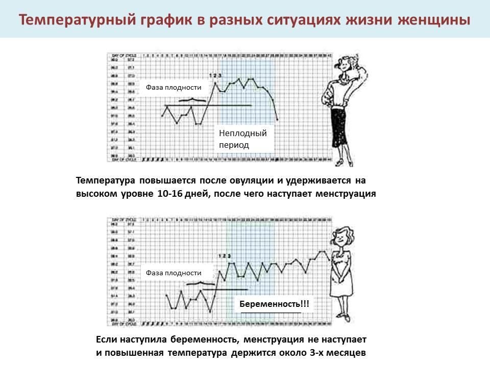Базальная температура: как измерить правильно и где проверить