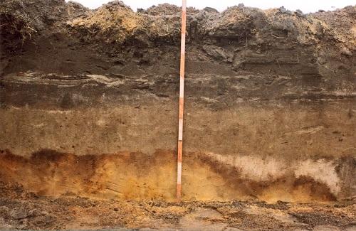 Слои земли по порядку в разрезе: строение почвы, типы горизонтов