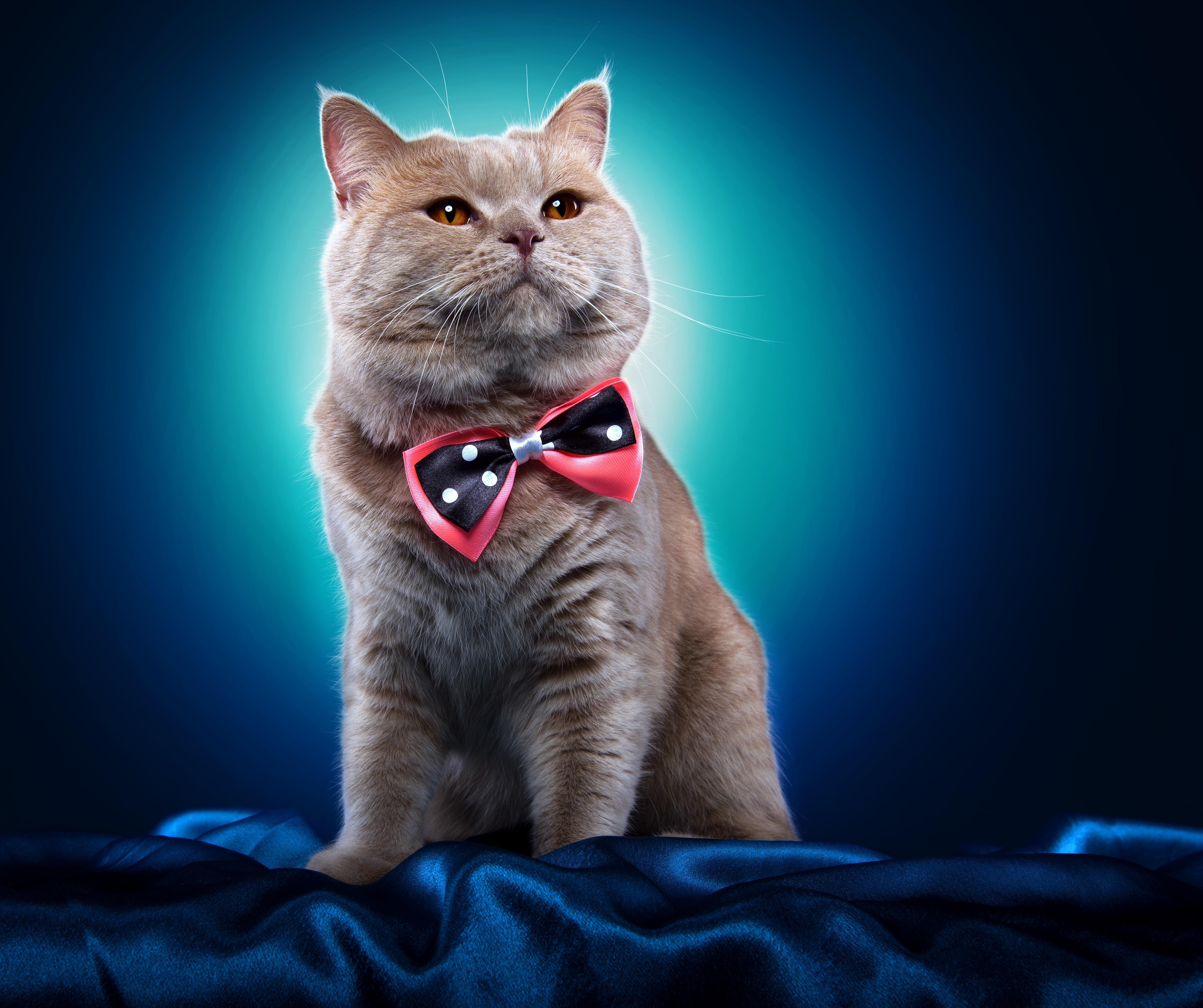 Котик, валентин александрович