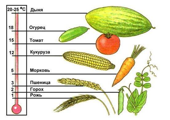 Какие проростки самые полезные – 10 видов зерен, которые непременно должны быть на вашей кухне