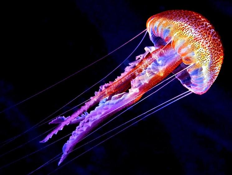 Сообщение о медузах по биологии: определение, где обитают, чем питаются, как двигаются, размножаются, сколько живут?