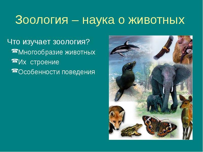 Наука зоология - животные, биология, развитие, история