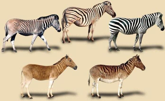 Существование видового разнообразия - вот что такое микроэволюция