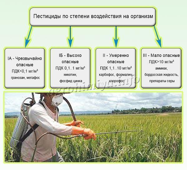 Фунгицид | справочник пестициды.ru