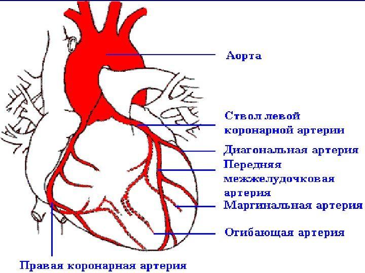 Опсс в медицине что это такое — cardio