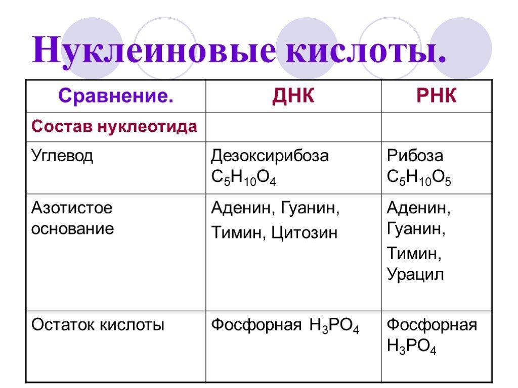 Нуклеиновые кислоты | энциклопедия кругосвет