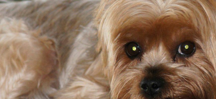 Бывают ли у собак месячные? объясняем популярно