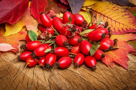 Шиповник - польза ягоды - ? когда собирать - как приготовить отвар