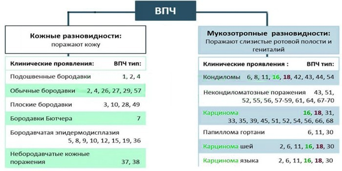 Расшифровка анализа на впч: интерпретация результатов анализов. вероятный диагноз | университетская клиника