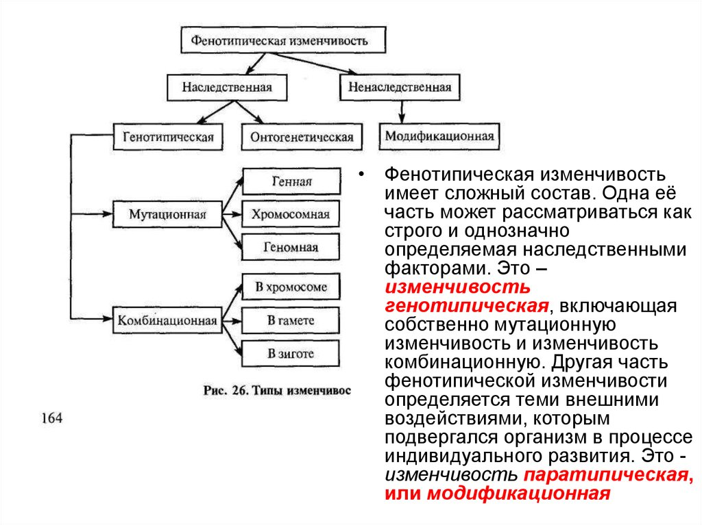 Мутационная и модификационная изменчивость. виды изменчивости. модификационная изменчивость, её свойства. наследственная изменчивость: комбинативная и мутационная   биология