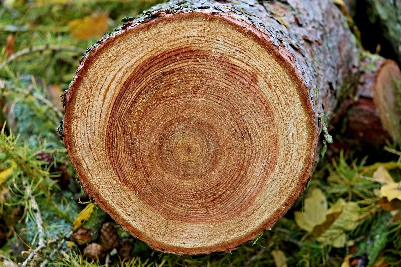 Годичные кольца деревьев, а что мы узнаем