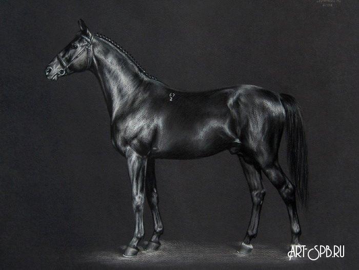 Лошадь – это благородное животное с многовековой историей