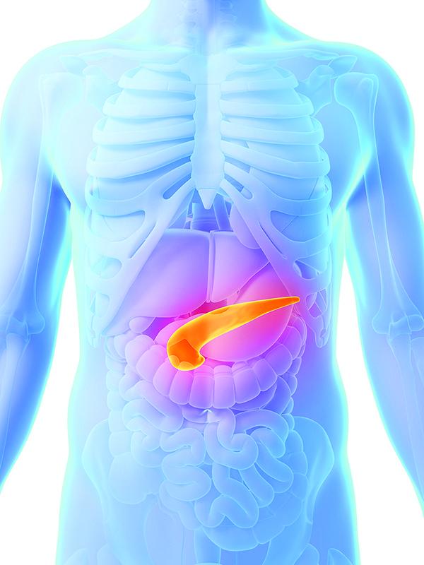 Эхогенность поджелудочной железы: значение, симптомы отклонений и лечение