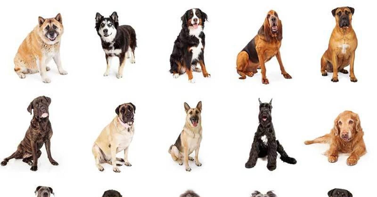 Значок собака @ - как называется этот символ, как на клавиатуре напечатать собаку