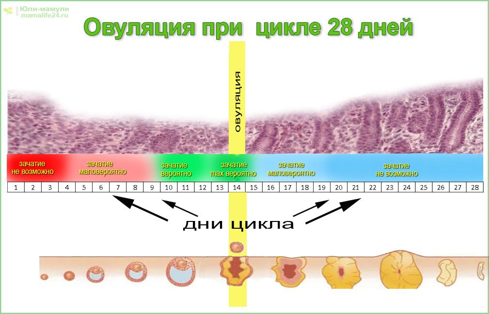 Что такое беременность с дефектной яйцеклеткой?