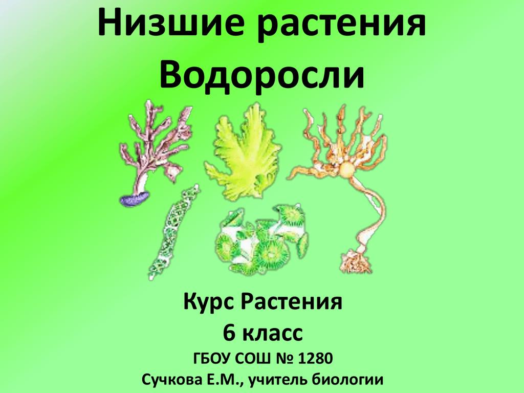 Многообразие растений. основные отделы растений. классы покрытосеменных. роль растений в природе и жизни человека