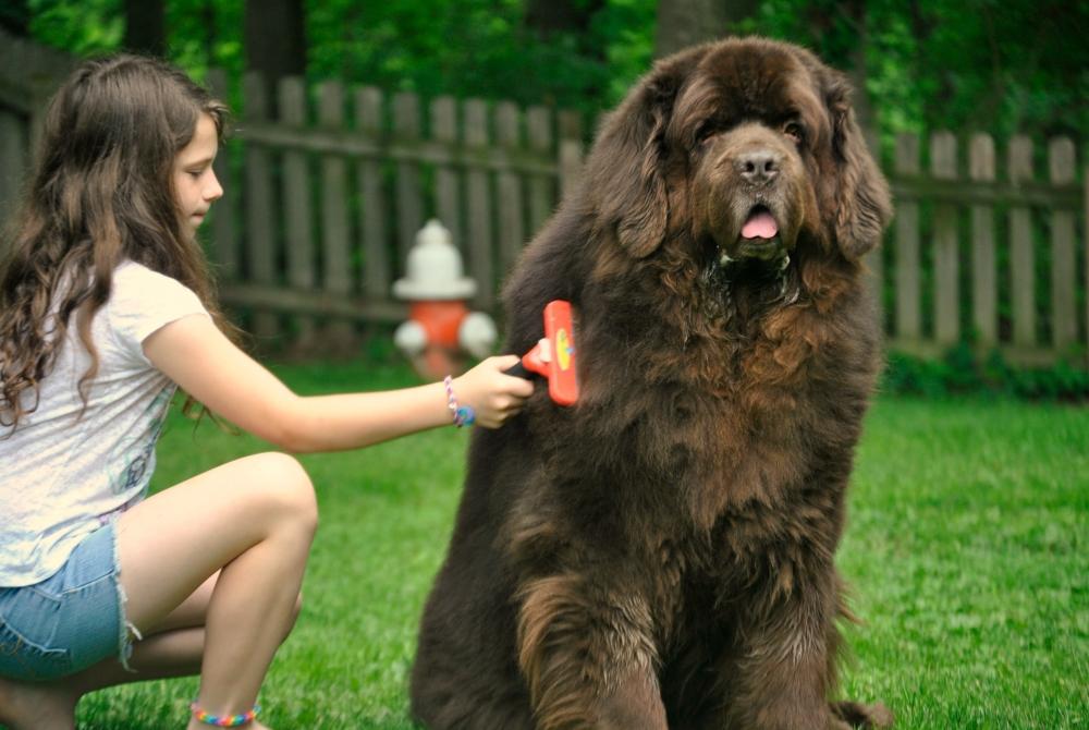 Что такое фурминатор для собак, как его выбрать и использовать