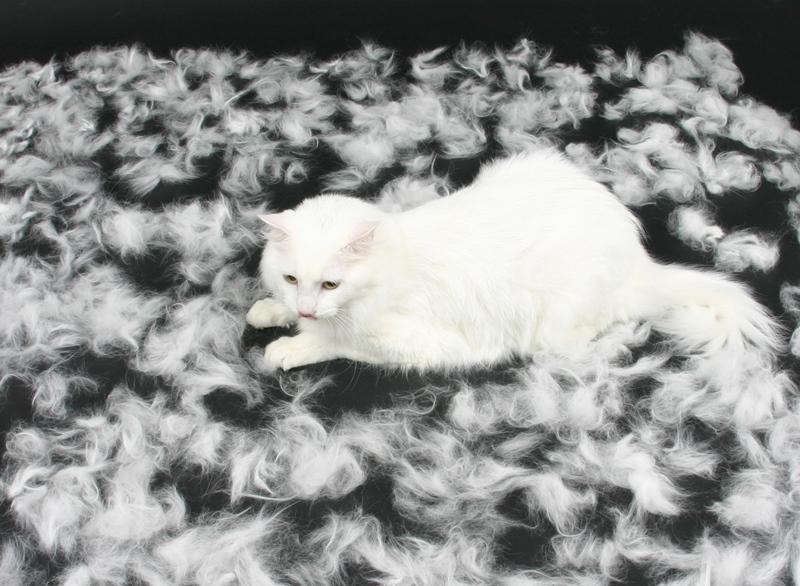 Фурминатор для кошек — принцип действия, советы по выбору и правила применения фуминатора (85 фото)