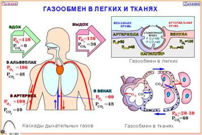 Что такое парциальное давление кислорода