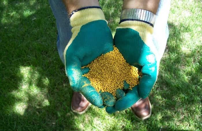 Мочевина для огурцов: как разводить, нормы удобрения, когда и как вносить – zelenj.ru – все про садоводство, земледелие, фермерство и птицеводство