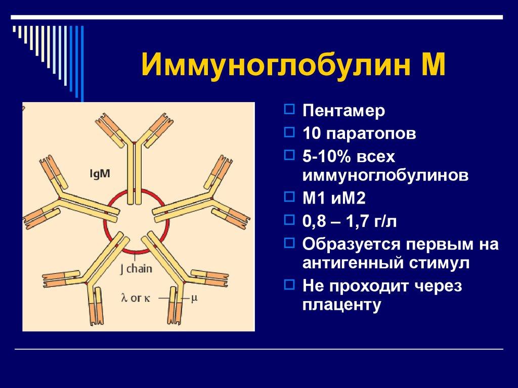 Анализ крови на иммуноглобулин (ig): что он показывает?