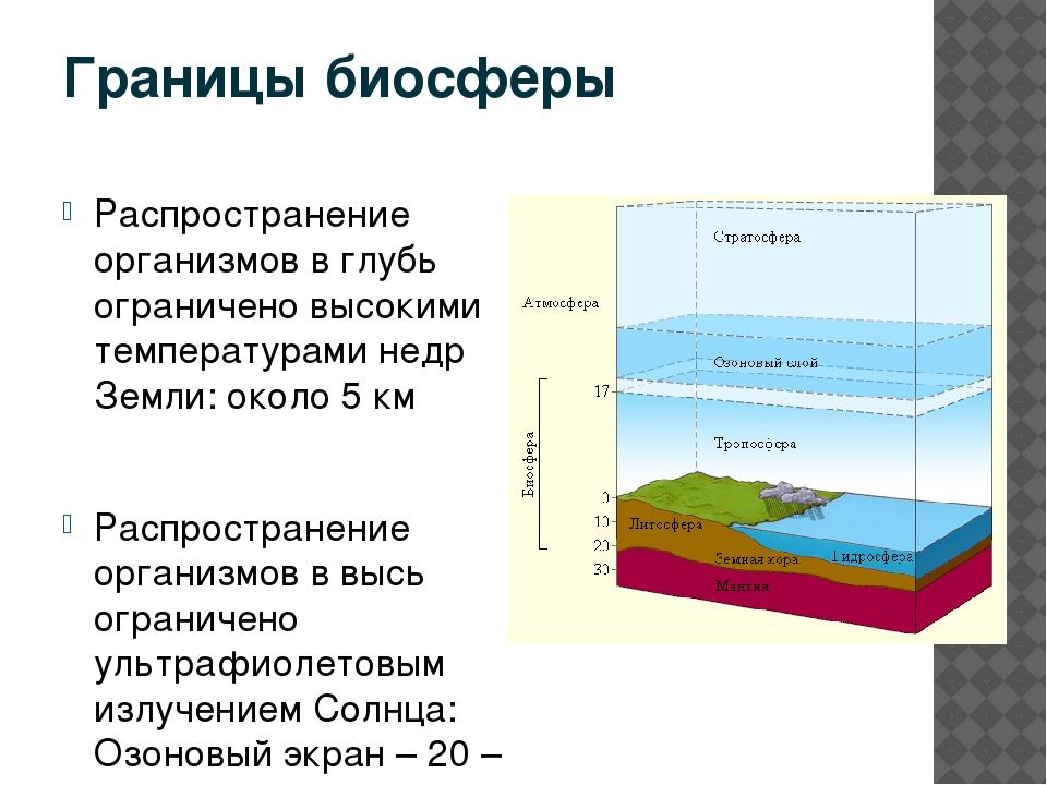 Биосфера. свойства, границы, состав и функции биосферы