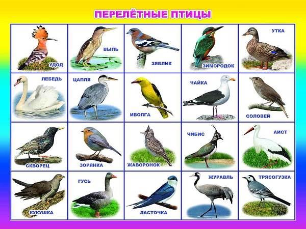 «пернатый» ликбез. что важно знать о птицах, которые живут в городе
