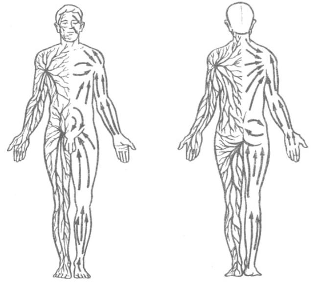 Что такое лимфа, как работает лимфатическая система человека?