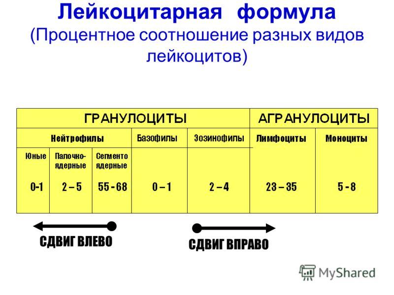 Лейкоцитарная формула крови, расшифровка
