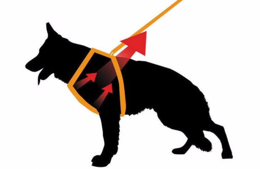 Шлейка для собак: как надеть, какая лучше, где купить шлейка для собак: как надеть, какая лучше, где купить