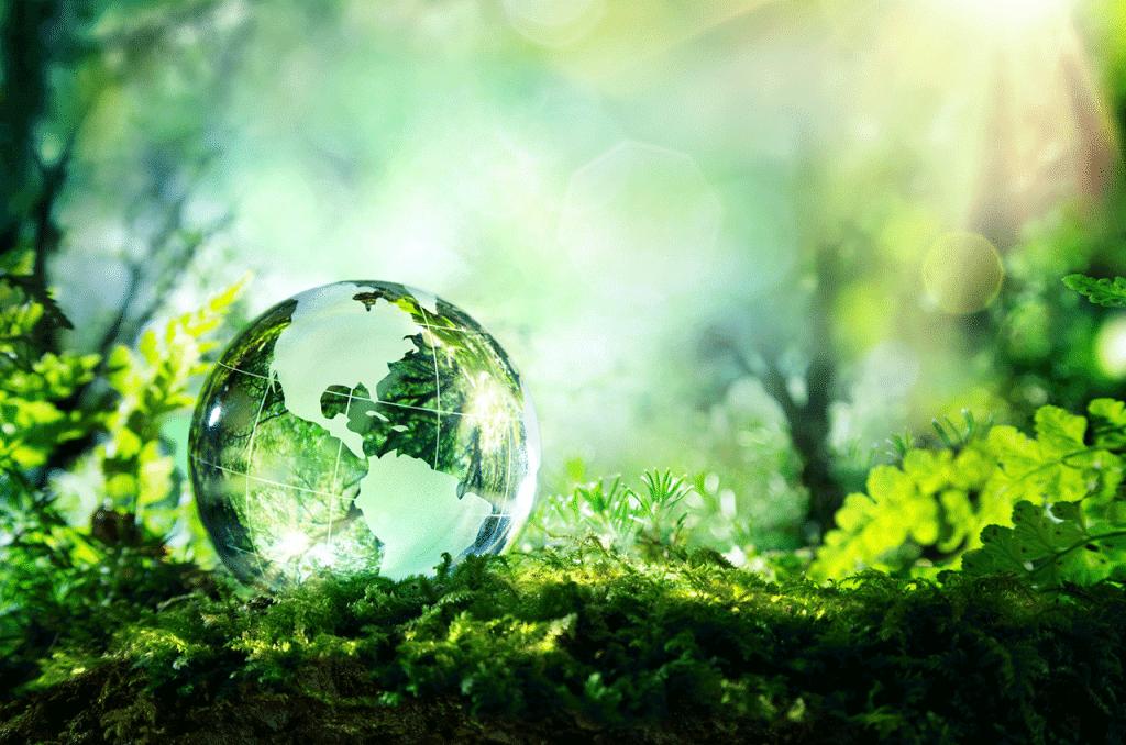 Что такое экология - часть человека или наоборот?