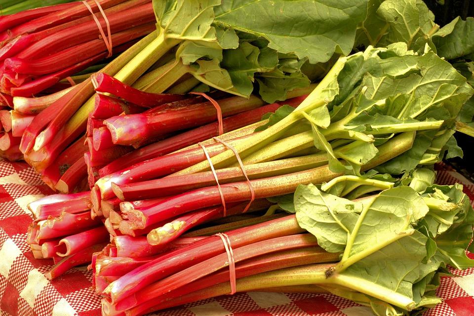Ревень: вред и польза, вкусные рецепты приготовления