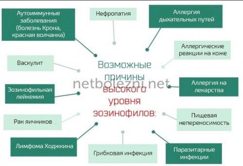 Эозинофилия, причины повышения эозинофилов в крови у ребенка и взрослого - medside.ru
