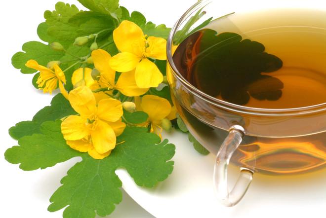 Чистотел – лечебные свойства, применение, противопоказания и рецепты – 4 сезона огородника