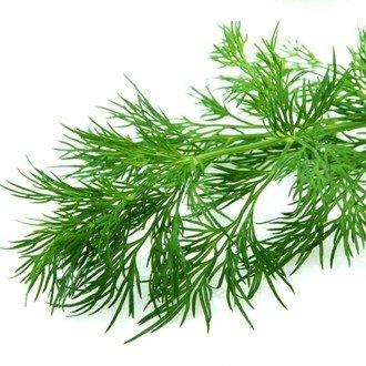 Укроп – полезные свойства, фото, популярные сорта, применение семян и зелени   все специи