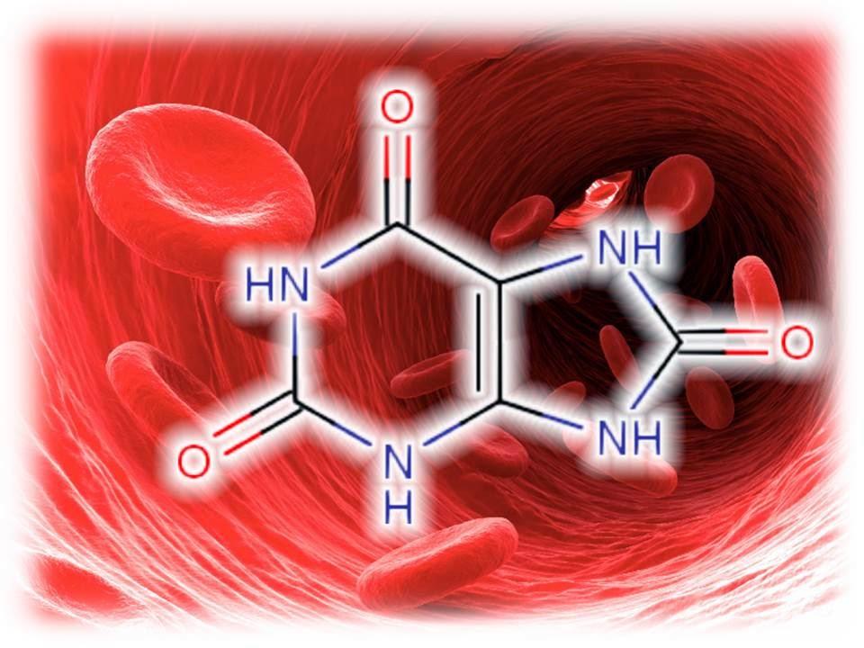 Высокий уровень мочевой кислоты в крови