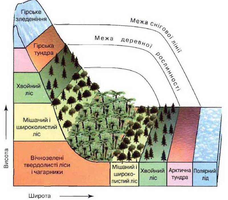 Что это - широтная зональность, и как она влияет на природу земли