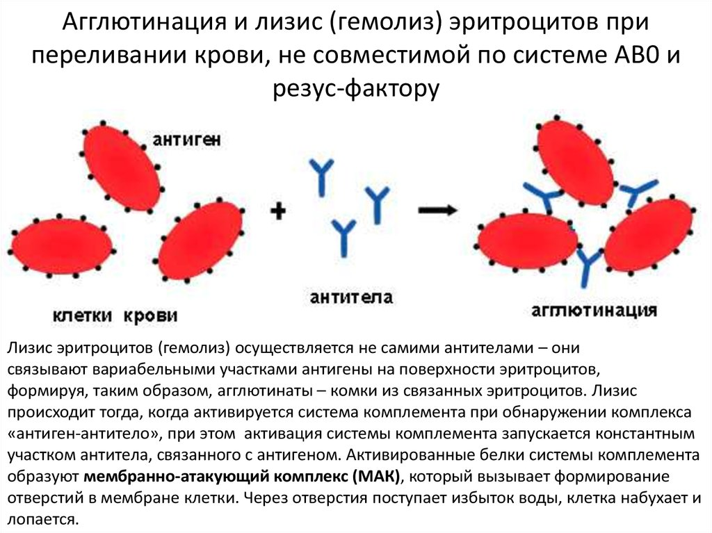 Гемолиз крови при сдаче анализов что