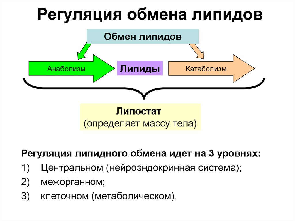 Классификация липидов: какие вещества к ним относятся