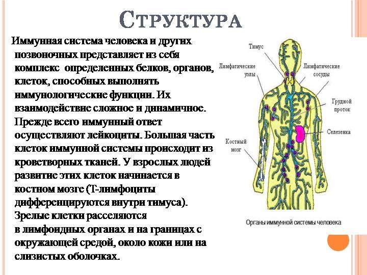 Иммунитет — википедия. что такое иммунитет