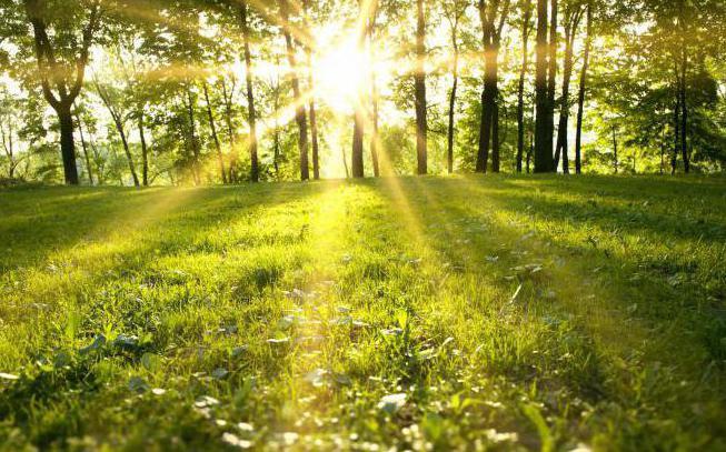 Что такое природа — живые и неживые объекты, природные явления, сообщества и экосистемы