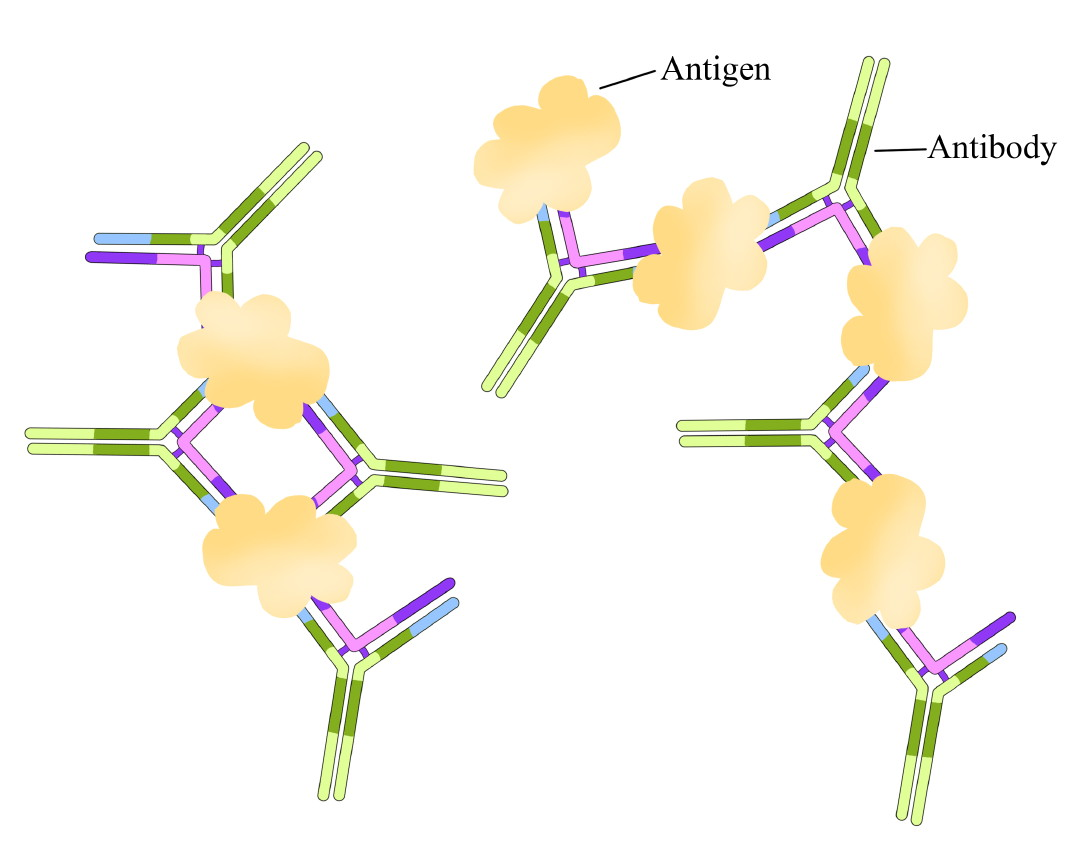 Что такое антиген? антитела и антигены