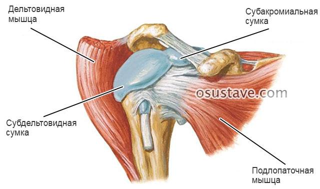 Симптомы и лечение бурсита локтевого и плечевого сустава