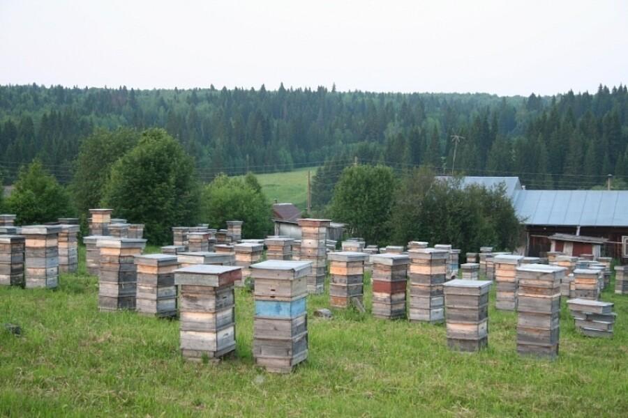 Пчеловодство для начинающих: пошаговая инструкция с чего начать и как развить пасеку (110 фото)