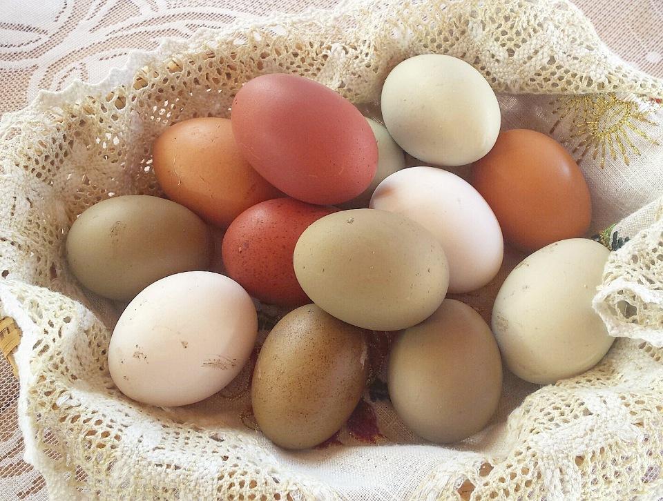 Куриное яйцо: строение и химические составляющие