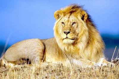 Значение имени лев (леон), его происхождение, характер и судьба человека, формы обращения, совместимость и прочее